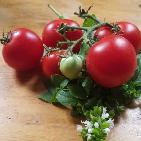 Busch-Tomate 'Bogus Fruchta'