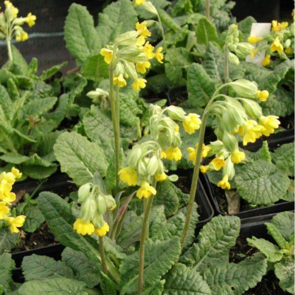 Kräuterspirale-Ergänzungspaket Heilpflanzen