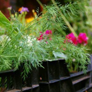 Bio Pflanzen A-Z