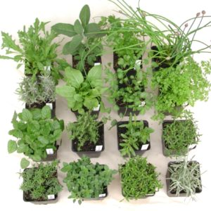 Bio Pflanzenpakete